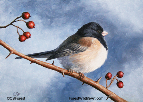 Oil painting of a dark-eyed junco by wildlife artist Crista Forest. ForestWildlifeArt.com Prints Available.
