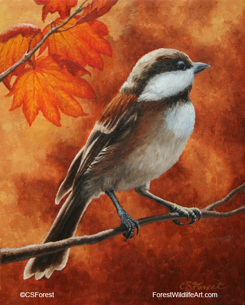 Oil painting of a chestnut-back chickadee, by wildlife artist Crista Forest. ForestWildlifeArt.com Prints Available.