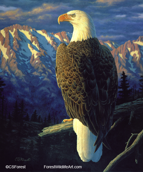 Oil painting of a bald eagle, by wildlife artist Crista Forest. ForestWildlifeArt.com Prints Available.