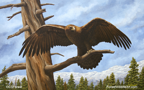 Oil painting of a golden eagle, by wildlife artist Crista Forest. ForestWildlifeArt.com Prints Available.