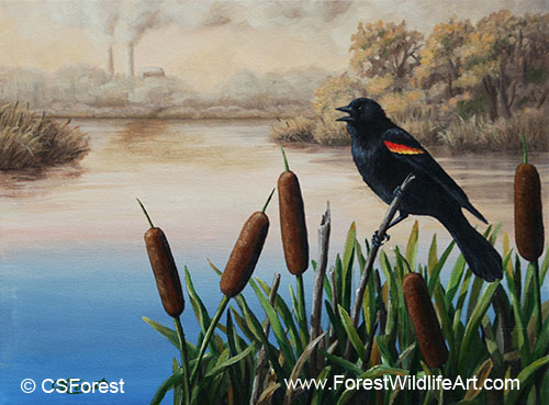 Oil painting of a red-wing blackbird, by wildlife artist Crista Forest. ForestWildlifeArt.com Prints Available.
