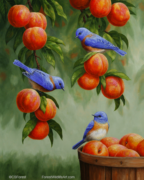 Oil painting of bluebirds in a peach tree, by wildlife artist Crista Forest, ForestWildlifeArt.com. Fine Art Prints available