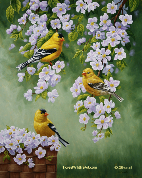 Oil painting of goldfinches and blossoms, by wildlife artist Crista Forest, ForestWildlifeArt.com. Fine Art Prints available