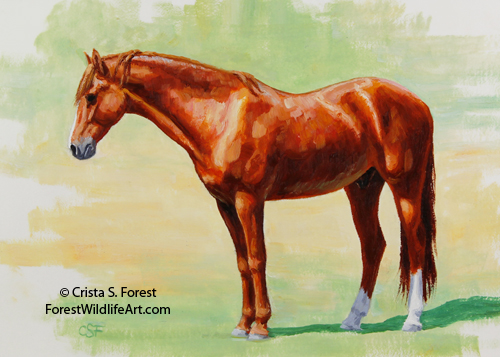 Oil painting of Morgan horse by equine artist Crista Forest, ForestWildlifeArt.com. Fine Art Prints available
