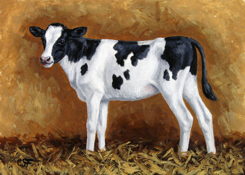 Oil painting of a Holstein calf by wildlife artist Crista Forest, ForestWildlifeArt.com. Fine Art Prints available