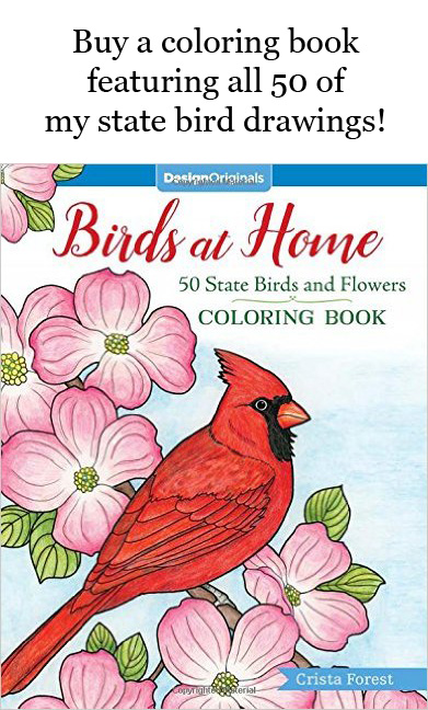 50 state birds coloring book