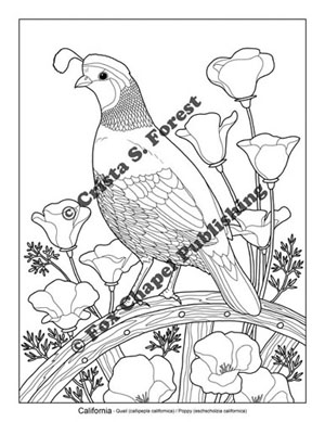 California Quail and poppy coloring page