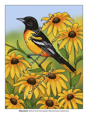 Baltimore Oriole and Black-eyed Susans