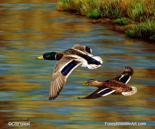 Mallard ducks flying over a pond