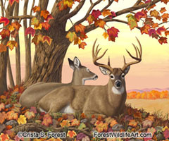 autumn whitetail deer painting