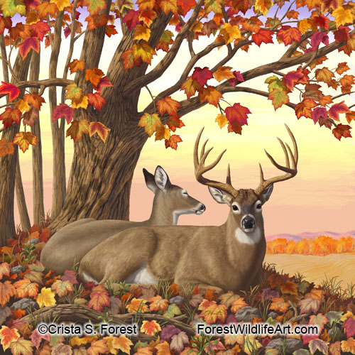 deer and autumn maple tree