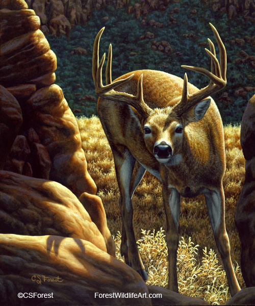 whitetail buck oil painting