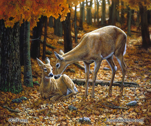 Whitetail deer & fawn