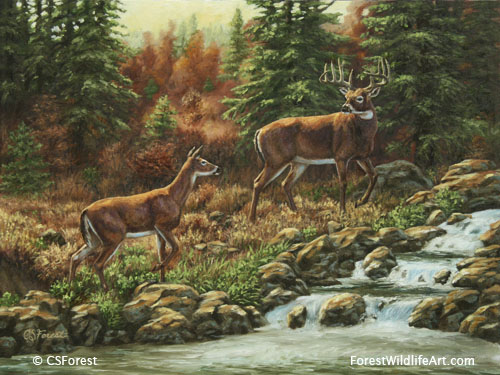 whitetail deer and waterfall