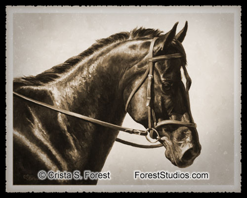 Bay Dressage Horse in Sepia