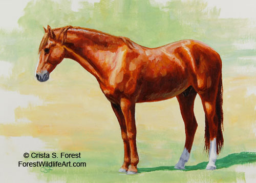 Chestnut Morgan horse picture