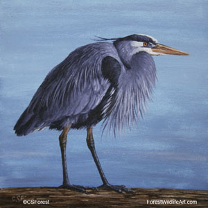 Great Blue Heron picture