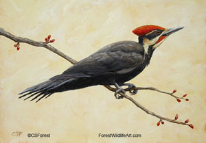 Pileated Woodpecker picture