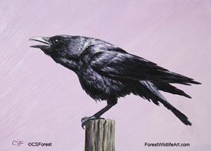 crow cawing