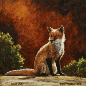 red fox images