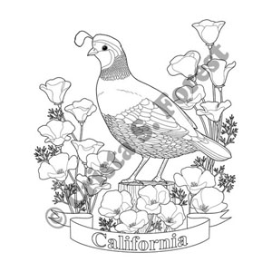 CA state bird and flower coloring page