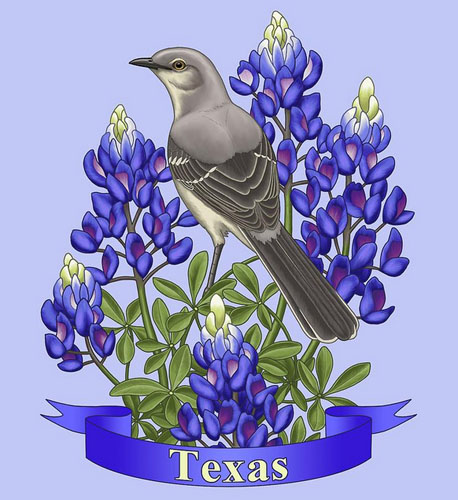 Mockingbird & Texas Bluebonnet