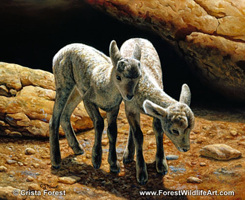 bighorn lambs painting