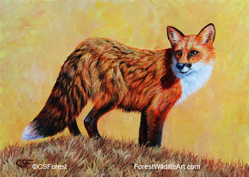 Oil painting of red fox by wildlife artist Crista Forest, ForestWildlifeArt.com. Fine Art Prints available