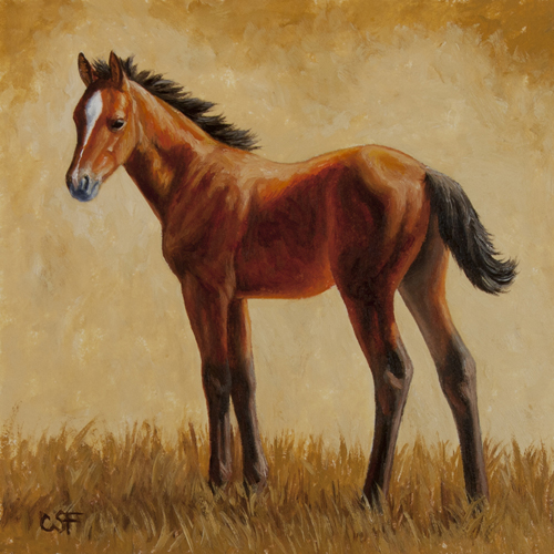 Oil painting of a bay foal by wildlife artist Crista Forest, ForestWildlifeArt.com. Fine Art Prints available