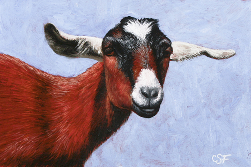Oil painting of a Nubian goat by wildlife artist Crista Forest, ForestWildlifeArt.com. Fine Art Prints available